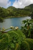 16 Tree fern and Freshwater Lake 1220