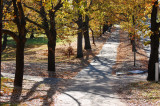 the sunny path