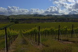 20100509_0057 Livermore Wine Country.jpg