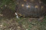 Tortoise Nesting