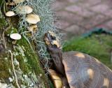 Mushroom Nibbler - Closeup