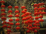 red lanterns swing in the winter cold_China