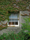Window, ivy and other miscellaneous vines .. 4874
