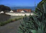 Old agave overlooking abandoned garages overlooking Winehaven overlooking Richmond/San Rafael Bridge .. 4894
