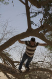 Conquering the Tree