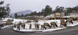 z P1070048 Elk snack at Brynwood.jpg