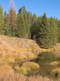 zP1020850 Wild place at Ox Bow bend on McDonald Creek near Apgar.jpg
