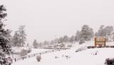 zP1030306 Fresh snow falling gently.jpg
