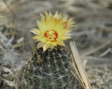 cactus BRD3461.jpg