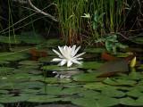 IMG_8533a Nature's Garden.jpg