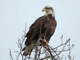 IMG_2850 Eagle.jpg