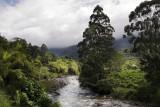River-Trees.jpg