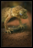 Fantasy Reptiles