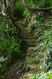 Stairs and Green