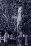 ghostly-graveyard.jpg