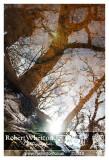 Forest Walk 05-01-10.jpg