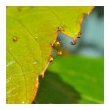 micro spider