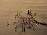 Oregon Umpqua River Reflections