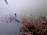 Umpqua River 2009