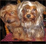 Tedley  & Timmy