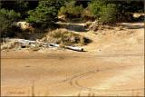 Sand Dunes  Southern Oregon Coast.jpg