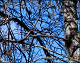 Branches Blue Sky