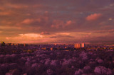 IR Sunset.jpg