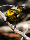 2010 Bird Migration