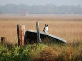 marsh cat, master of all  he surveys