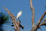 white heron, blue sky