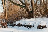 Shades of Winter 2009
