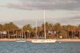 Sailboats at sunup