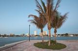 Windblown Palms