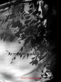 hojas y sombras
