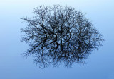 Flooded Blackthorn