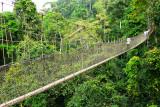 Treetops Walkway
