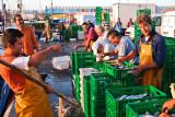 Sorting Sardines
