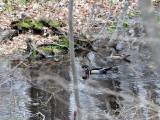 Woods Pond Woodies1.jpg