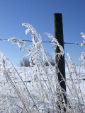 Frost & fence