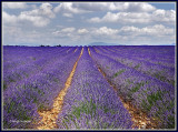 FRANCE - PROVENCE