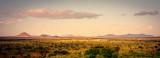 Golden hour of the savannah