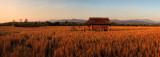 Field of Dreams in Laos