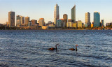Perth and black swans in Swan River
