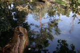 up side down (a small pond)