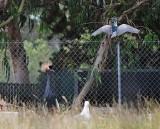 Night Heron and Crane