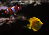 Two Fish. . .