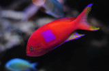 Red Fish. . .