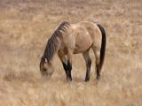Golden Horse in Grass