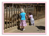 Fence Encounter