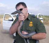 A 6 foot Texas Indigo and some Random BP Agent